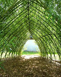 Willow Tunnel - Schoolscapes - Playground Equipment Our Willow Tunnel can be installed to any length Willow Branches, Willow Tree, Willow Bush, Willow Fence, Living Willow, Pergola, Patio Grande, Sensory Garden, Living Fence