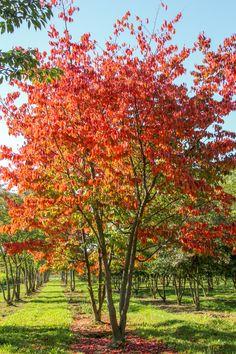Trees And Shrubs, Trees To Plant, Garden Trees, Garden Plants, Landscape Curbing, Jungle Gardens, Manor Garden, Drought Tolerant Garden, Small Garden Design