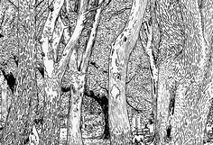 Ingo Giezendanner's new book asks: What are the similarities are between books and trees? Its Nice That, Peaceful Places, Eye For Detail, Detailed Drawings, Art Blog, New Books, Illustrations, Monochrome, Trees