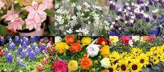 「ハンズマンで春を満喫!」8:  ハンズマンの植物コーナーにいると、色とりどりの花々に囲まれてとても癒されます。
