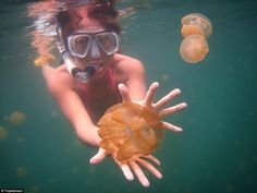 The isolated diving lake is filled with harmless jellyfish creating a diving excursion like no other