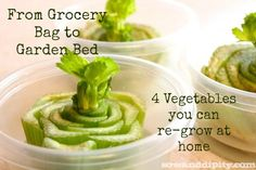 grocery bag to garden bed - how to regrow kitchen scraps to the garden - reusable food - and other items easily grown at home