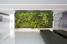 Green wall for reception area at spa