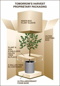 Diagram - Tomorrow's Harvest Proprietary Packaging and Shipping Container Craft Packaging, Flower Packaging, Pretty Packaging, Design Packaging, Plant Crafts, Plant Projects, Mail Order Plants, Plant Box, Garden Shop