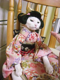 Geisha Kitty