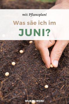 Aussaat & Pflanzen im Juni + Beispiel-Pflanzplan - Zwar gibt es im Juni bereits einiges im Garten zu ernten, doch gibt es weiterhin viele Arbeiten rund ums Gemüse vorziehen und aussäen. Auf meinem Blog findest du Tipps zu Gemüsearten, die du direkt im Garten aussäen kannst. Dazu zählen z.B.: Karotten, Mangold, Rote Bete, Zucchini und oder Salate. Viel Spaß damit und eine erfolgreiche Ernte! :) #Pflanzenanzucht #Selbstversorgung #Wurzelwerk Plantation, Wedding Art, Education Quotes, How To Dry Basil, Gardening Tips, Home And Garden, Outdoor, Juni, Survival