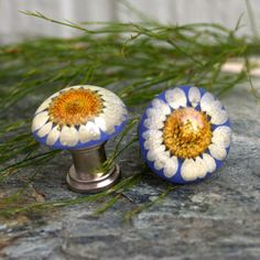 Cabinet Knob Clear resin with preserved Daisy by KnuckleheadKnobs