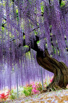 Ashikaga Flower Park #japan #tochigi...The flowers are beautiful...the support structure is amazing and a must!  Look closely and you will see the steel poles and grid work holding up this ancient vine!