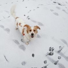 """""""I made footprints for you."""" 