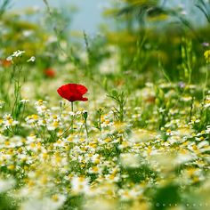 Mellow Meadow by Oer-Wout on deviantART! Thanks Miss Soo for Sharing♡