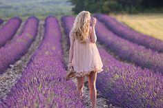 The Golden Bun   with love from Munich / Südtirol / Paris: Lavender fields