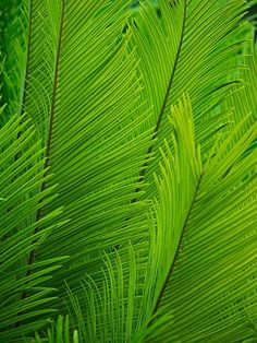 ;-) green fronds
