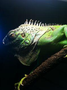 Amazing creature