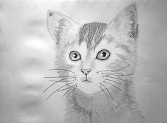 Kitten by Ionuț Scurtu (Shortie)