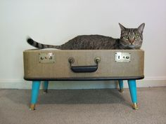 vintage suitcase pet bed - Continued!