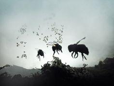 vanishing of the bees  http://www.blog.designsquish.com/index.php?/site/vanishing_of_the_bees/