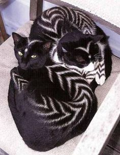 New Form Of Art : Cat Painting http://avaxnews.me/funny/new_form_of_art_cat_painting.html