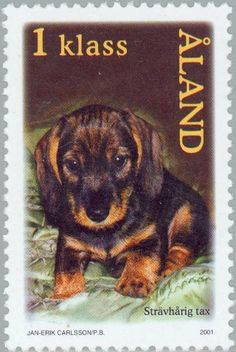 Stamp%3A%20Wire-haired%20Dachshund%20(Canis%20lupus%20familiaris)%20(%C3%85land%20Islands)%20(Dogs)%20Mi%3AAX%20196%2CSn%3AAX%20192%2CYt%3AAX%20196%2CAFA%3AAX%20196%20%23colnect%20%23collection%20%23stamps
