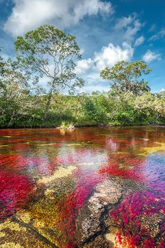 Caño Cristales is a Colombian river located in the Serrania de la Macarena province of Meta.