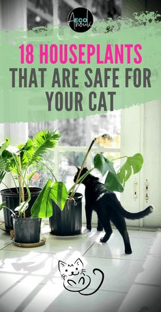 Cats can be tough to handle around houseplants. Do you know which houseplants are non-toxic for cats and which aren't? This list of 18 cat-safe indoor plants will help you when you have to decide a ne Cat Safe Plants, Cat Plants, Plants Toxic To Cats, Houseplants Safe For Cats, Easy House Plants, House Plants Decor, Indoor House Plants, Begonia, Cat Friendly Plants
