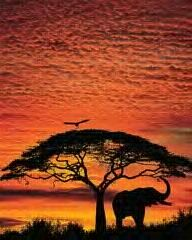 Africa just beautiful. Thought of you, @Katie Bickerton :)