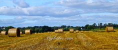 Straw bales in a field near Tandragee, County Armagh, Northern Ireland.