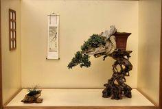 U2BONSAI: Beauty bonsai