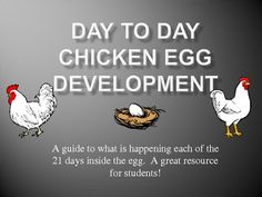 A FREE powerpoint over the 21 days of chicken egg development.  Each slide has information and a drawing of each day of development.  A great resou...