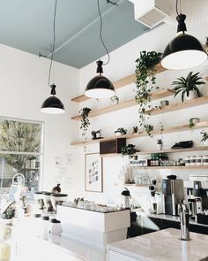 The Shelves From Which Plants Hang Bright E With A White Focus People And Delicious Coffee All Of Make This