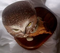 Evelyn Hurford - - Saw-whet Owl Carving Saw Whet Owl, Owls, Carving, Wood Carvings, Owl, Sculptures, Printmaking, Tawny Owl, Wood Carving