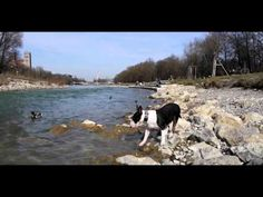A Bullis Day 2 (A bullterriers day 2) - YouTube Videos, Dogs, Youtube, Animals, Animales, Animaux, Doggies, Animal, Animais
