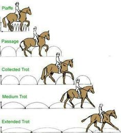 Trot lengths