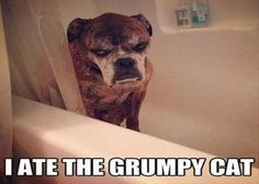 I ATE THE GRUMPY CAT: more funny pictures @ http://fartinvite.com/