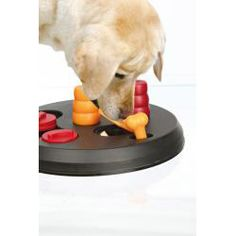 @Overstock - Flip Board is an intermediate level game designed for puppies/small breeds.   By correctly sliding the covers, opening the flaps and lifting cones, your dog will reveal hidden treats.  Vary the placement of treats for an added challenge. $20.99