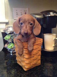 One puppy to go - http://puppypicturesplease.com/one-puppy-to-go/  #puppies #dogs #cute