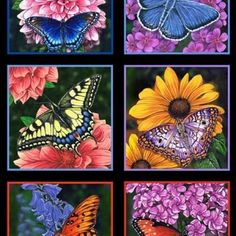 """Elizabeth's Studions Butterfly Garden Squares Black - 24"""" Panel - Sold by the Panel"""