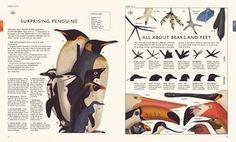 Curiositree: Natural World - Owen Davey Illustration