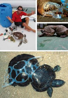 ocean plastic sea turtles