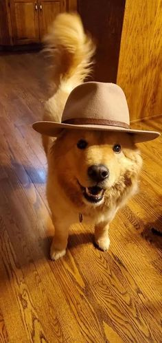 M'lady – modern - - Hunde - Perros Cute Baby Animals, Funny Animals, Dog Pictures, Animal Pictures, Cute Puppies, Dogs And Puppies, Baby Puppies, Pet Dogs, Family Dogs