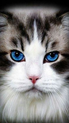 Pretty blue