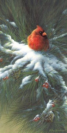 Beautiful Cardinal Art
