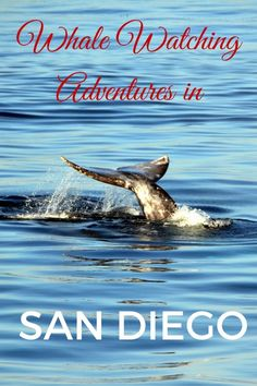 Whale Watching Adventures in San Diego - The World Is A Book