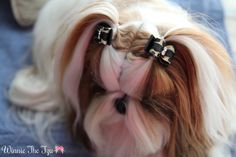 pigtails :).  This is such a beauty!!!!!  Blu says NO long hair,