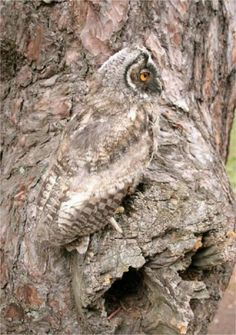 Camouflaged Owl....flippin love owls
