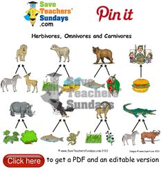 Year 1 Lesson 8 carnivores omnivores and herbivores worksheets, lesson plans and other primary teaching resources Primary Teaching, Teaching Resources, Save Teachers Sundays, Ganesh, Lesson Plans, Worksheets, Classroom, Science, How To Plan