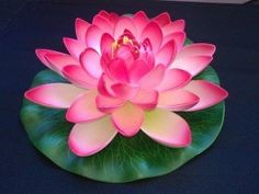 flor de loto 8 pétalo                                                                                                                                                                                 Más