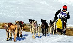 Mushing in the Lleida Pyrenees (Spain). www.lleidatur.com     Photography: JoanFarré