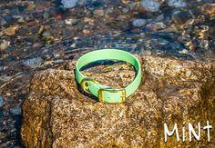 Waterproof Dog Collar in Light Pastel Mint Green