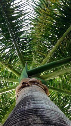 Beautiful Palm Tree