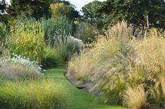 Alan Titchmarsh, tips, growing, ornamental, grasses, garden, autumn